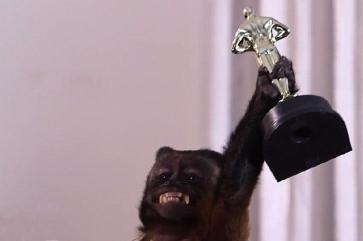 Monkey Award