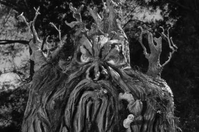 from-hell-it-came-photo-tree